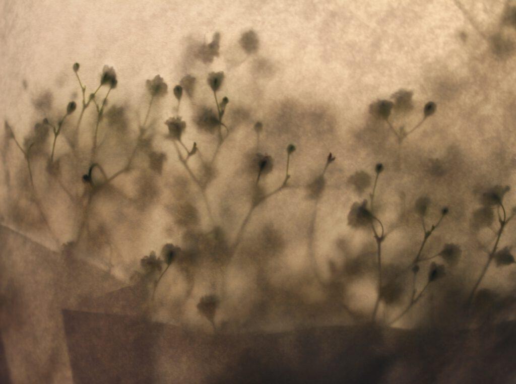 Blumen Schatten